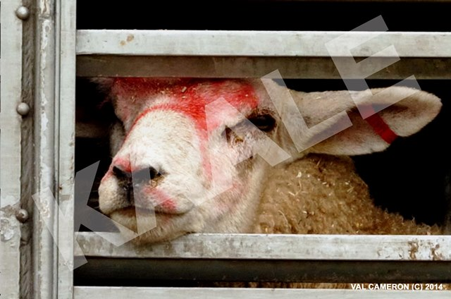 PLEASE HELP & SUPPORT US TO BAN LIVE EXPORTS